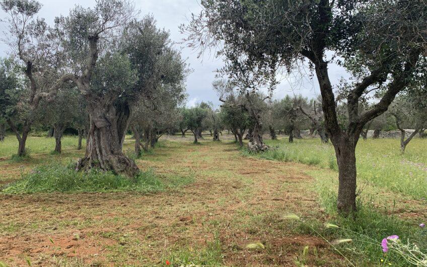 Terreno con fabbricato vicino al mare Corsano